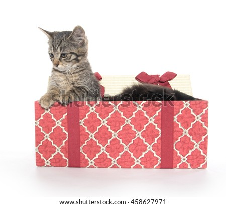 Two cute baby cats with Christmas gift box isolated on white background - stock photo