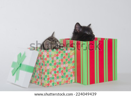 Two cute baby kittens inside of gift boxes on white background - stock photo