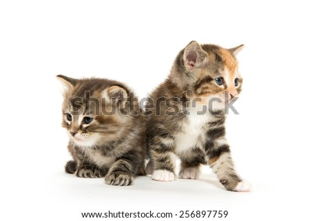 Two cute baby kittens on white background - stock photo