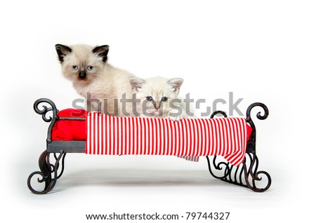Two cute baby kittens resting on a bed with red striped blanket on white background