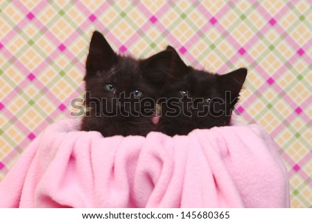 Two Cute Black Kittens on Pink Pretty Background - stock photo