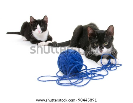 Two cute cats playing with blue yarn on white background