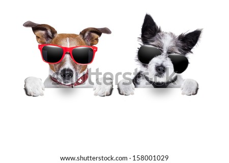 two cute dogs  together behind  a blank placard - stock photo