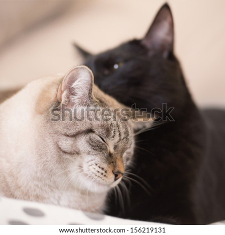 Two cute domestic short hair cats snuggle with one another while lying on a bed - stock photo