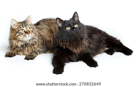 Two cute fluffy cats isolated on white background - stock photo