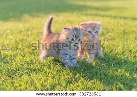 two cute kitten on green grass with evening sun light - stock photo
