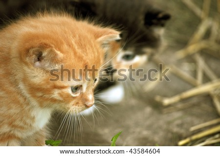 Two cute kittens - stock photo