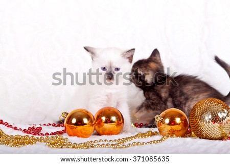 Two cute kittens on a white background - stock photo