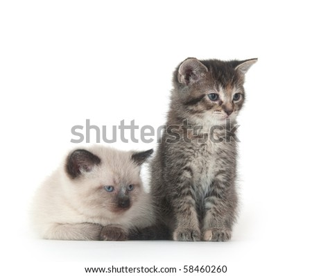 Two cute kittens on white background
