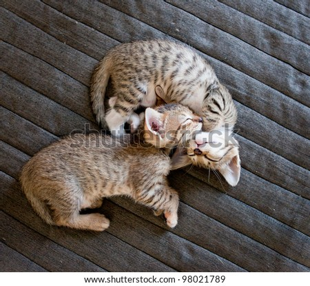 two cute kittens sleeping on bed cover - stock photo