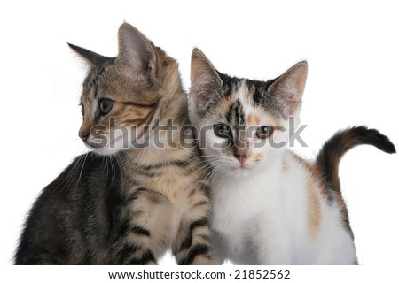 Two cute kittens standing next to each other - stock photo