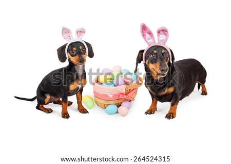 Two cute little Dachshund dogs wearing Easter bunny rabbit ears while sitting next to a basket of pastel color eggs - stock photo