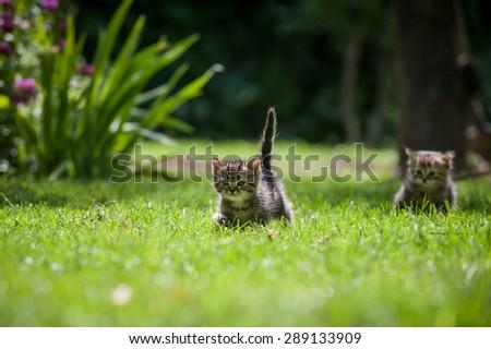 Two cute little kittens running through a green lawn - stock photo