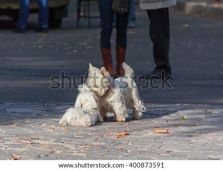 Two cute pet dog enjoyed meeting. Pets - stock photo
