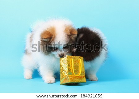 two cute puppies with the holiday parcel - stock photo