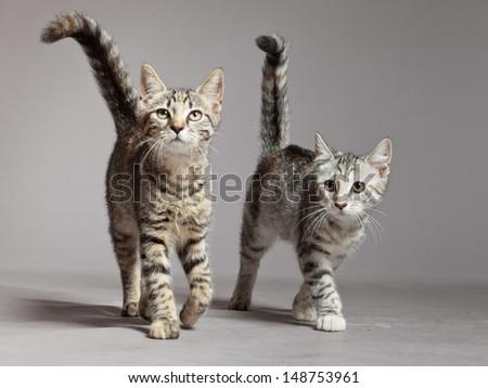 walking cat stock images royaltyfree images  vectors