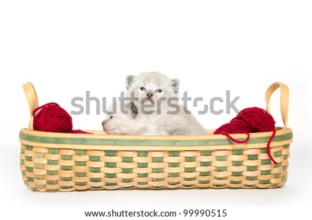 Two cute three-week old kittens in a basket on white background