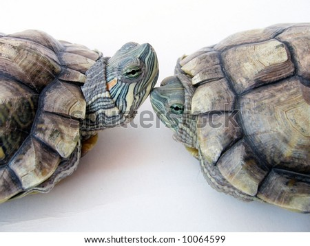 Two Cute Tortoises - stock photo