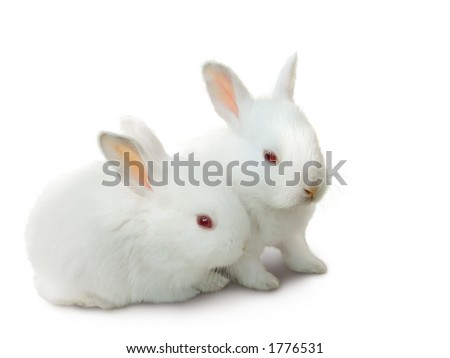 Two cute white baby rabbits. Easter bunnies, isolated on white. - stock photo