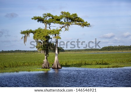 Two cypress trees growing on the banks of the Saint Johns River in Central Florida. The trees are silhouetted against a slightly cloudy blue sky.