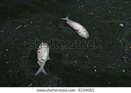 Two dead fish surrounded by pollution - stock photo