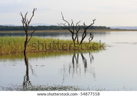 Two dead trees on the edge of a lake in south africa's kwa-zulu natal region - stock photo