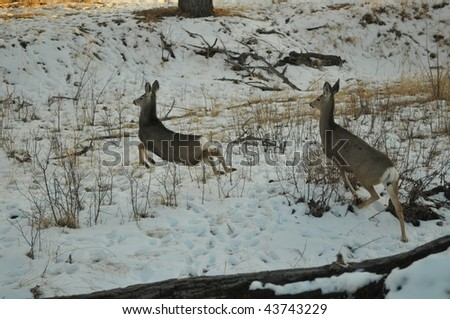 Two deer running through the snow.
