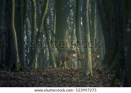 Two deers in the woods