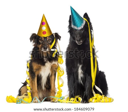 Two depressives dogs wearing party hat and sitting in serpentines  - stock photo