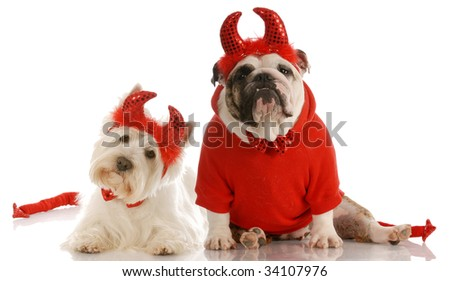 two devils - english bulldog and westie dressed up as devils - stock photo