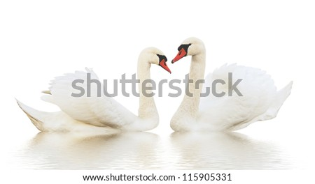 Two different swans on the ripple surface. - stock photo