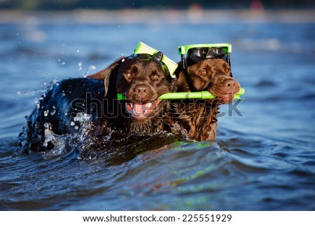 two diver dogs - stock photo