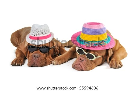 Two Dog in Beach Hats enjoying the Sunshine - stock photo