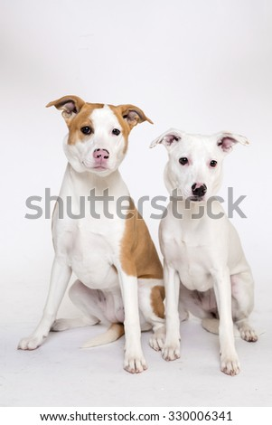 Two Dog isolated on white background