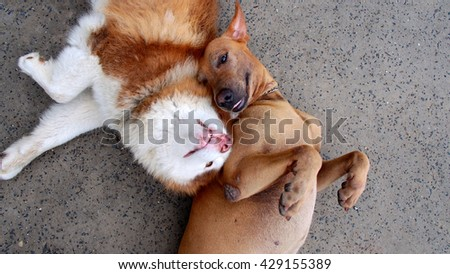 Two Dog so Close - stock photo