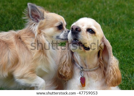 Two dogs are playing - stock photo