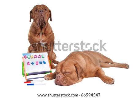 Two dogs doing math lessons - stock photo