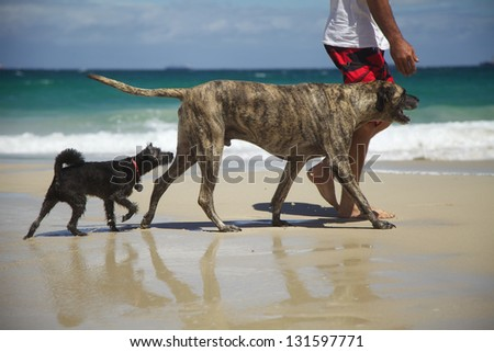 Two Dogs - Follow the Leader - stock photo