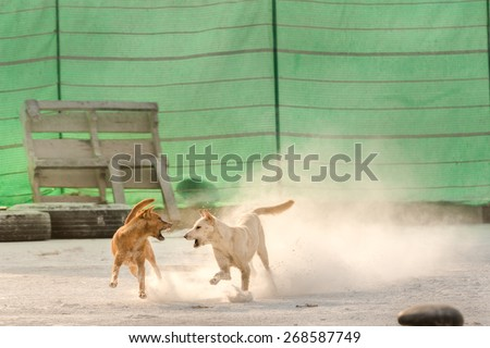 Two dogs  get angry while playing each other - stock photo