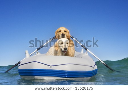 Two dogs in a boat - stock photo