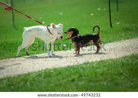two dogs in a park, narrow depth of field - stock photo