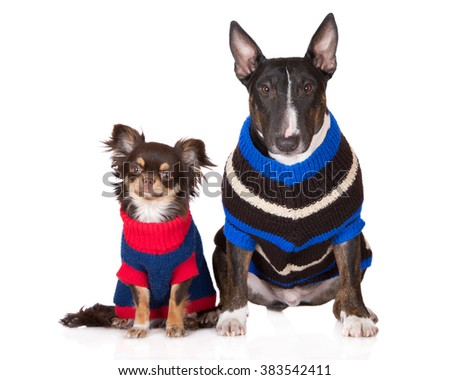 two dogs in knitted sweaters - stock photo