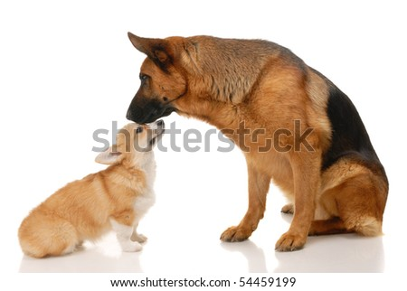 Two dogs in the studio on a white background
