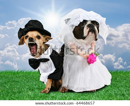 two dogs in wedding attire looking upset - stock photo