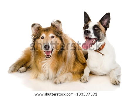 two dogs looking at camera . isolated on white background