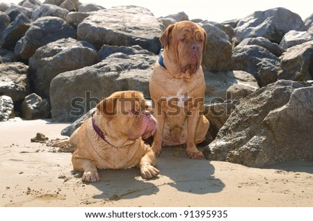 Two dogs lying on the sand after having a bath in the sea - stock photo