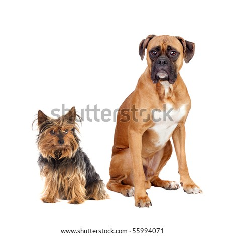 Two dogs of different breeds isolated on a white background - stock photo