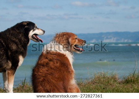 two dogs on a grassy bank above a surf beach  - stock photo
