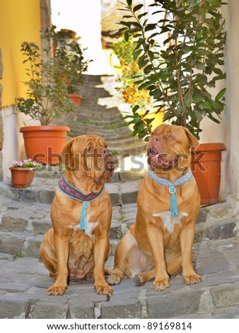 Two dogs on the srairs of a medieval street staircase - stock photo