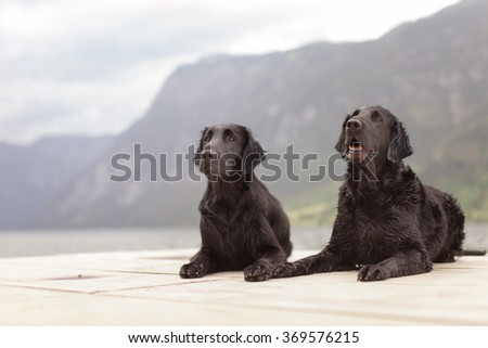Two dogs on the wooden desk.